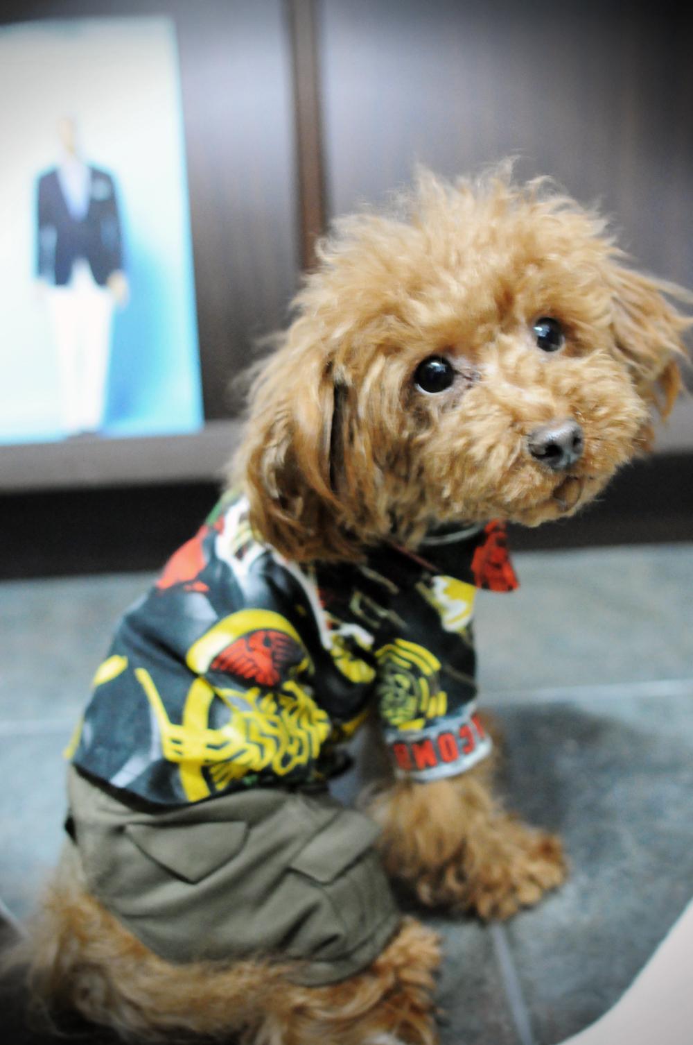 仮面ライダーの犬服